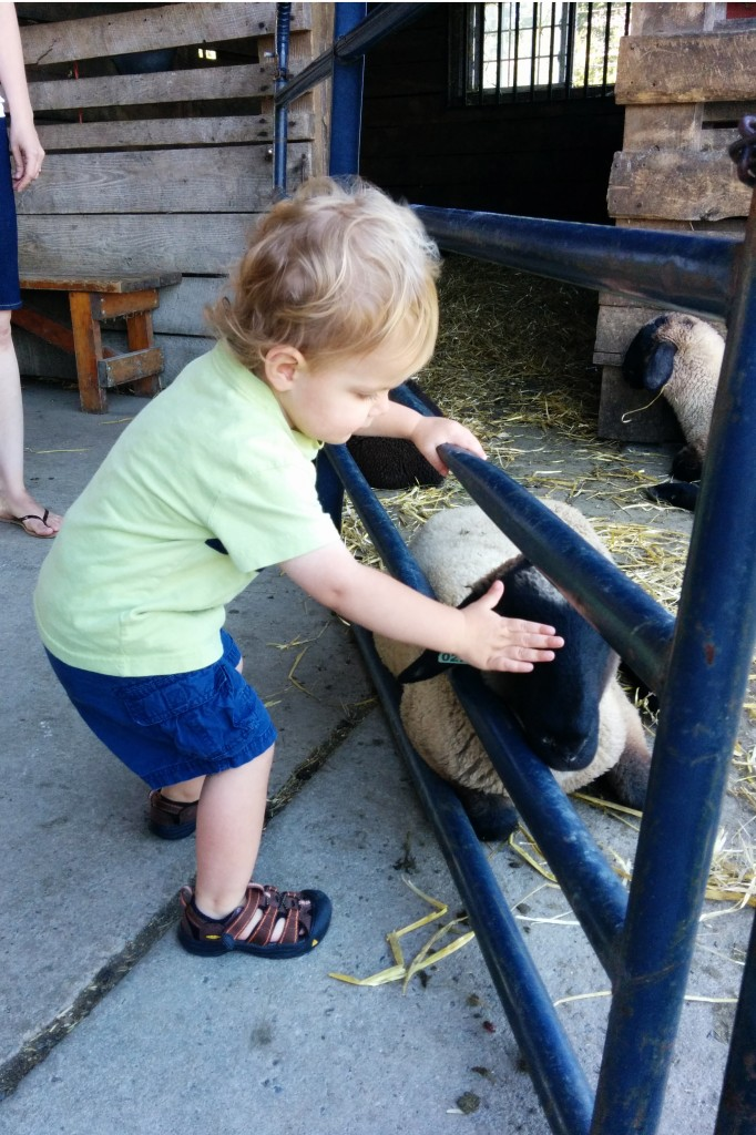 No hesitation about petting any of the animals.
