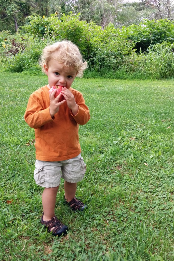 Our walk home took us to the visitor's center, where we watched baby turtles in a tank and checked out other local wildlife. And then we stumbled upon an apple tree that was begging for little hands to pick the fruit.