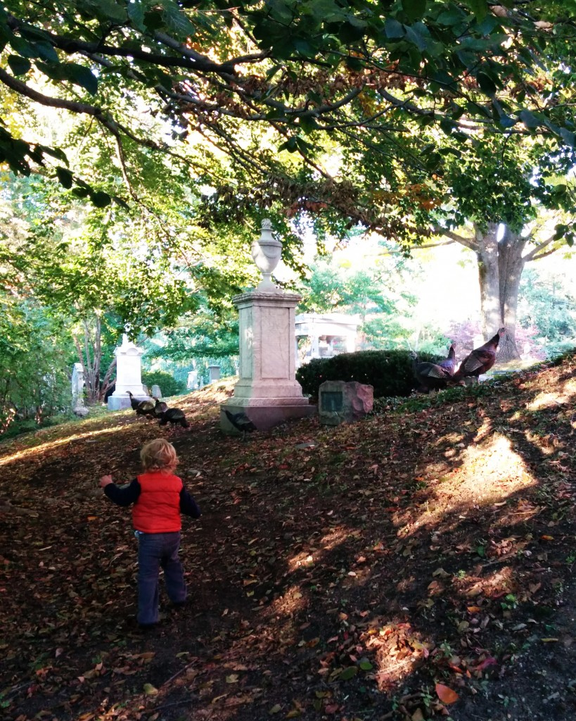On Sunday we wandered Mt. Auburn Cemetery and chased some turkeys.