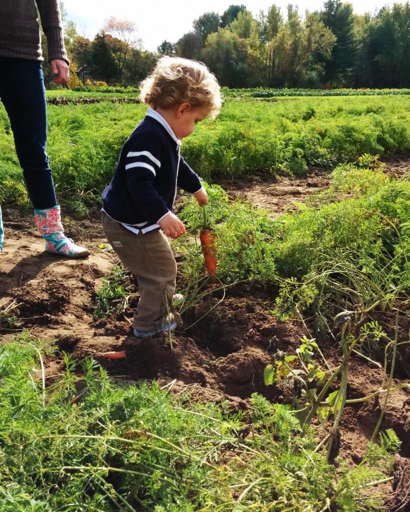 Farm life. Picking fresh carrots for our dinner.