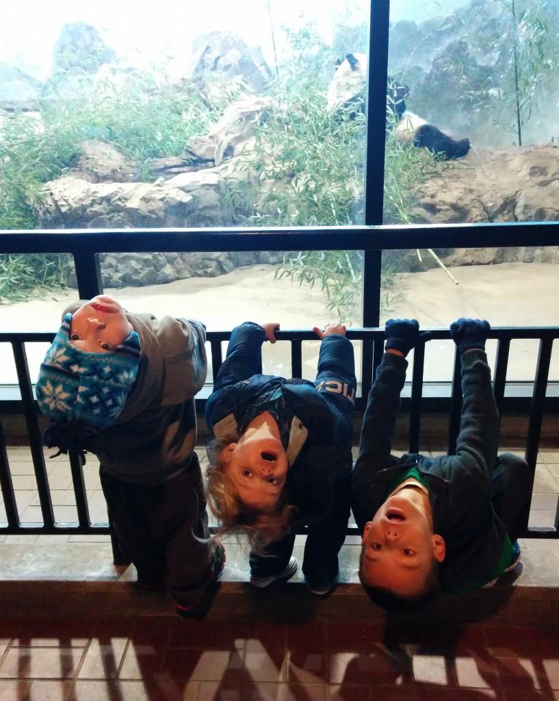 Three little monkeys watching Mei Xiang (or is it Tian Tian?) in the panda house.
