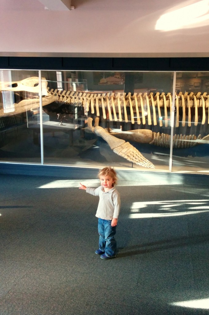 Schools were canceled, so we were expecting to fight for parking and dino-viewing space at Harvard's Museum of Natural History. Turns out we were the only ones who made it outside. We had the place to ourselves and had the time of our lives.